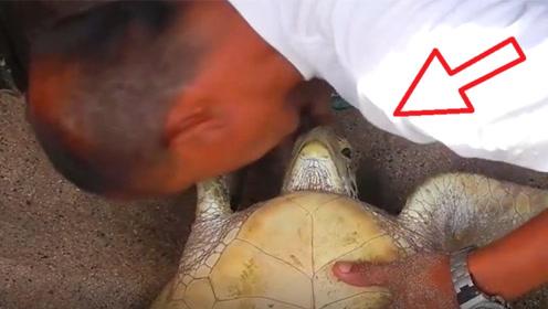 濒死海龟向人类求助,男子一眼便明白问题所在,一起来见识下