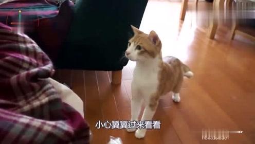 猫咪第一次见刚出生的宝宝,网友:太懂事了