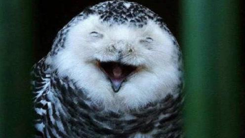 """老人临死前,为啥猫头鹰会在附近""""冷笑""""?说出来你别不信"""