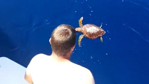 聪明的海龟向人类求救,将它捞上来后,才发现海龟身体有大秘密