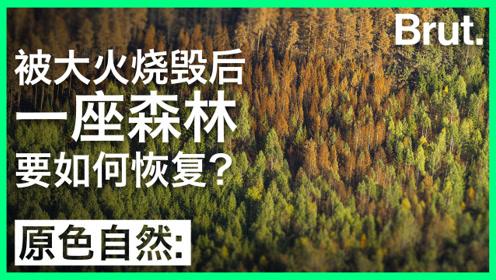 一座被大火烧毁的森林是怎么恢复的?