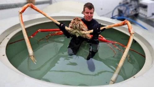 世界上体型最大的甲壳动物:第一名重40斤,最后一名长4.2米
