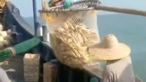 罕见!渔民一网捕获6万斤黄花鱼:捕捞1个多小时,价值百万