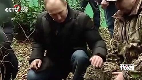 硬核普京温柔撸豹,就问你感动吗?豹子:不敢动不敢动