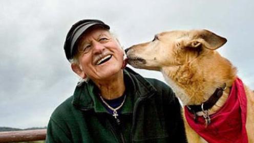 老人养了17年的狗死后,竟留下巨额遗产,网友:都是命啊!
