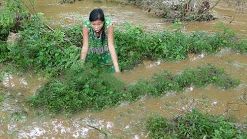 20斤大鱼在泥塘里乱窜,小妹一顿猛如虎的操作,直接抓来烤着吃