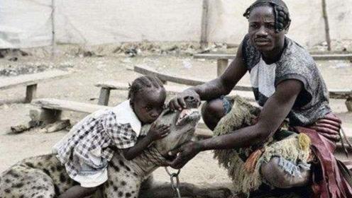 称霸的鬣狗,为什么非洲人一点都不害怕?全是震撼
