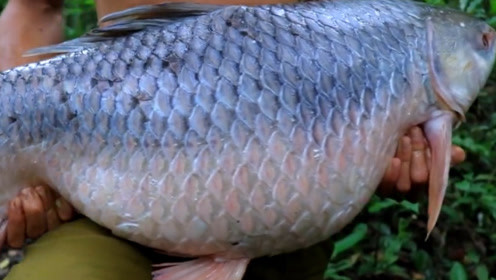 小伙子在山里抓到条35斤重大鱼,切开后都惊呆了,吃的好过瘾