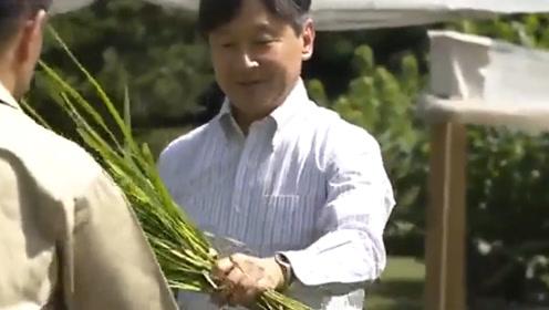 日本德仁天皇收割5月亲种稻米 着筒靴面露笑容感受收获喜悦