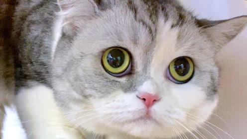 偷喝主人杯子里的水,围观主人上厕所,这些迷惑行为你家猫咪有吗