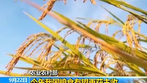 农业农村部:今年我国粮食再丰收大豆面积增加1000万亩