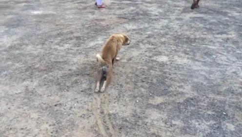 狗狗拖着残疾的后腿前进,下一秒画风突变,网友:奥斯卡影帝