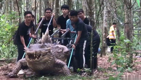 电影揭秘:鳄鱼追人原来是这样拍出来的,看完后觉得导演很良心了