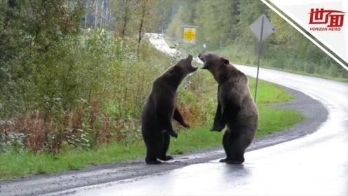 能用嘴就不用手!两头熊马路上干架 直立对吼许久才开打