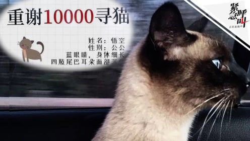 紧急呼叫丨杭州女子寻猫重奖万元却不兑现:承认转账造假 很内疚