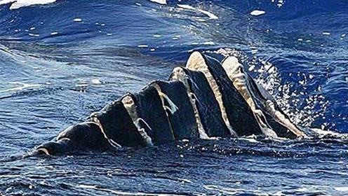 航母的螺旋桨有多可怕?堪称海洋生物绞肉机,专家:无法解决