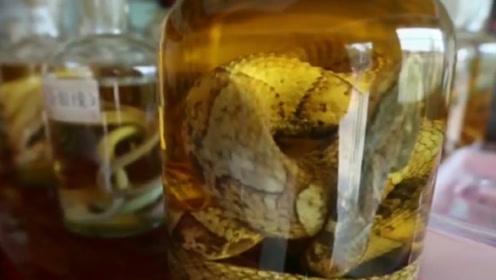 村民用白酒泡眼镜王蛇,一年后毒蛇从酒坛窜出,一口咬死村民!
