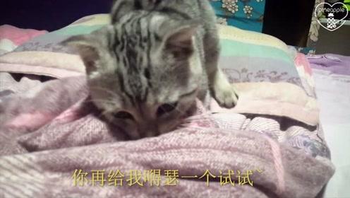 小猫半夜不睡觉,咬住主人的脚就不松口,主人:我太难了