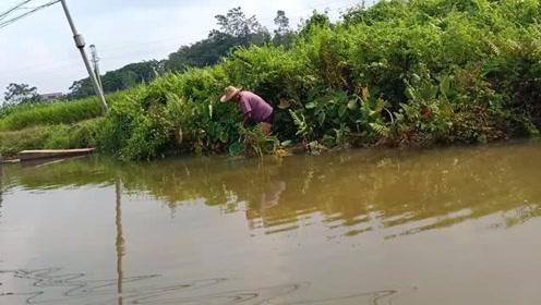 在广东农村,想不到这种小河里,藏有那么多野货,收获太惊人了!