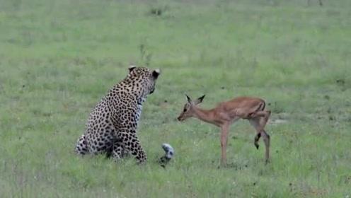 小鹿以为老虎是朋友,却不知这是场阴谋,一家几口要完蛋了