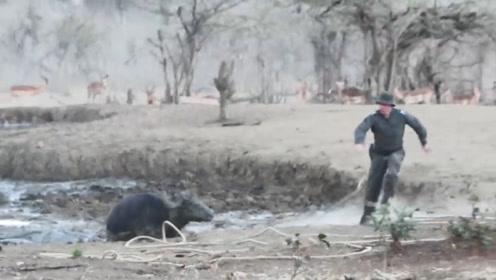 野牛一家子身陷泥潭,男子上前解救,下一秒,扔掉绳子就跑