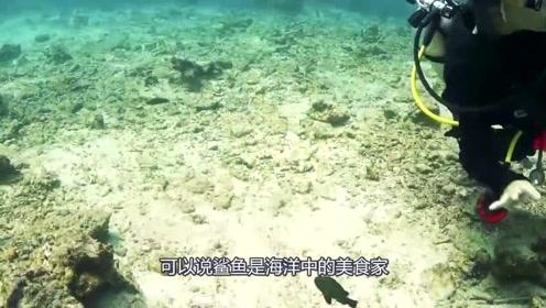 和鲨鱼一同遨游海底,你害怕了吗