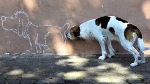 为何狗狗见面喜欢闻对方,难道有香味吗?看完涨知识了