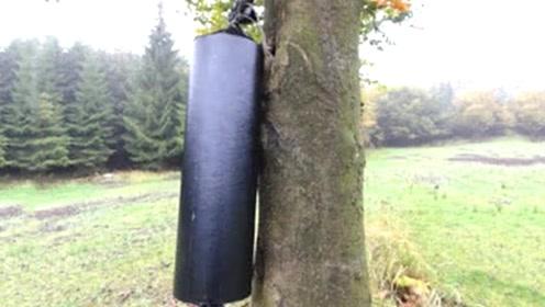 巨型鞭炮能炸断大树吗?老外作死点燃,20秒后才是霸气的开始