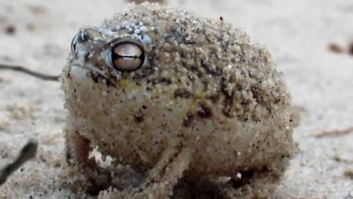 动物如何传达信息,雨蛙学起了猫叫,这些声音你都听见过吗