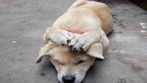 小伙抡起棍子打小土狗,狗狗急忙抱头躲闪,让人哭笑不得
