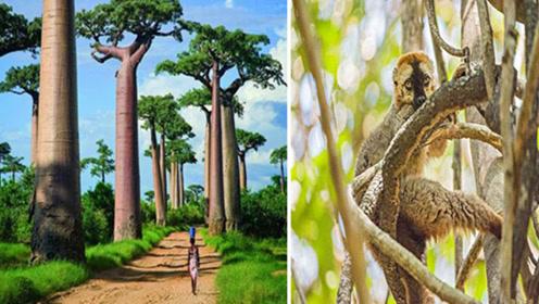 马达加斯加岛上的四个独特景观,别地看不到!