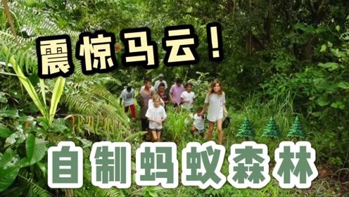 震惊马云的蚂蚁森林!一群孩子20年种了24000棵树