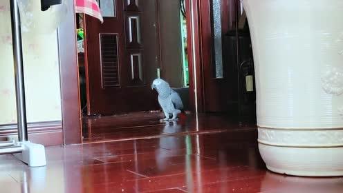 一只天上飞的小鸟,却偏偏愿意屋地溜达,还不停的跟妈妈唠着小磕