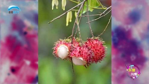 盘点泰国的一些特色水果