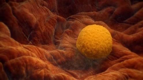 受精卵着床有感觉?排卵期后7天,如果身体有这四个感觉,恭喜你