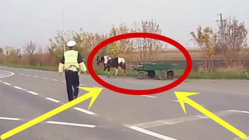 """交警看到""""自动驾驶""""的马车,走进一看傻眼了,车主真心大!"""