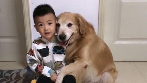 金毛艾迪最喜欢哥哥了,看它们抱在一起的样子好温馨,艾迪真可爱