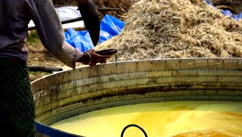 印度人用甘蔗提炼糖块,这场面隔着屏幕都犯恶心,不敢想象