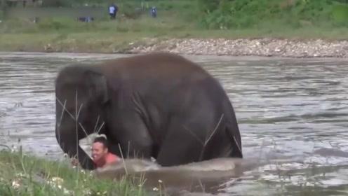 小象看见人类落水,第一反应就是跑去救人,这只小象一定是天使吧