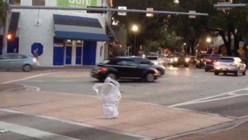 一个白色物体气势汹汹过马路,走出了二百五的气势,真是开眼了
