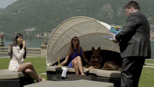 世界上最有钱的狗,坐拥25亿财产,仆人无数豪车接送