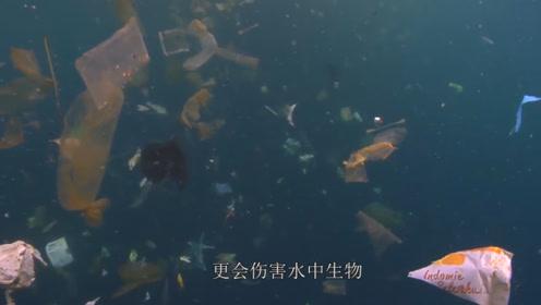 泰晤士河螃蟹胃中塞满塑料!多数来源于卫生巾,吃蟹人:晴天霹雳