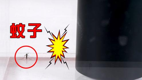 把蚊子放在封闭空间里,用低音炮能震死吗?