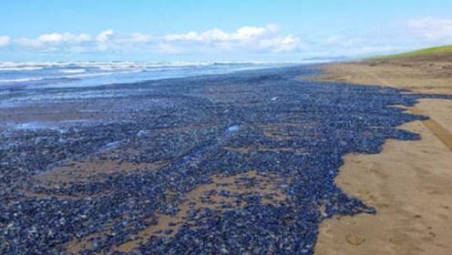 """沙滩上出现密密麻麻的""""蓝宝石"""", 当地居民只能观望不敢捡拾"""