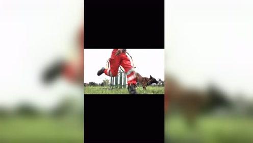 追梦路上没有一路绿灯,搜救犬训练大型翻车现场。