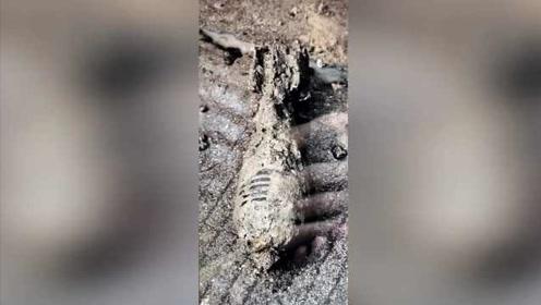下水井挖出25cm迫击炮弹,深埋淤泥多年,初步认定系战争遗留