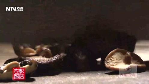 母猪壳竟然是美食?吃过吗?