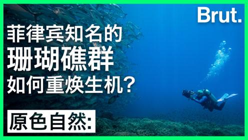 菲律宾知名的珊瑚礁群如何重焕生机?