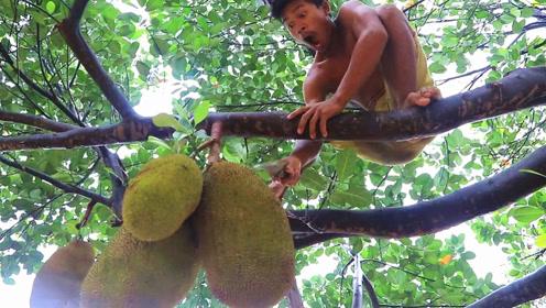 发现树上挂着这么大的野味,小伙赶紧爬树采摘,一转眼吃得狼吞虎咽