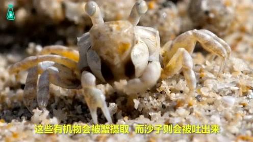 小螃蟹在沙滩上的平淡一天,然而配上这调皮的旁白,简直太有趣了